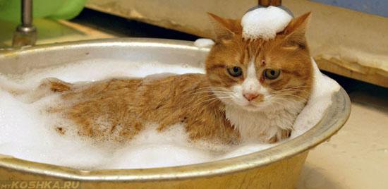 5 летняя кошка купается в ванночке