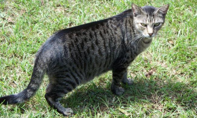 Матёрый кот гуляет по поляне