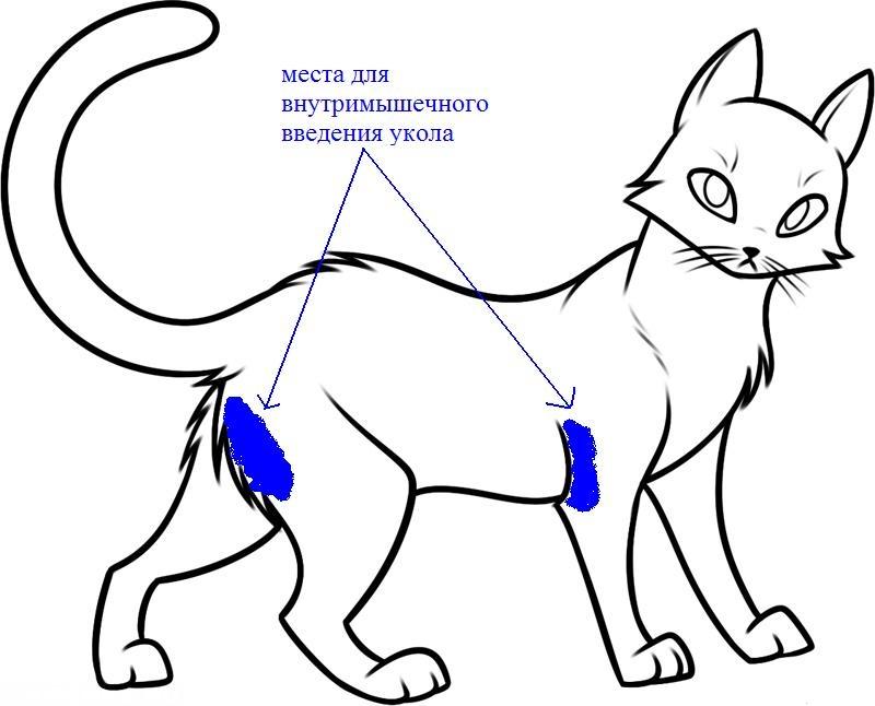 Раскраска про кошка