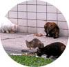 Много котов сидит на улице