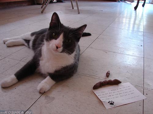 Кошка нагадила на пол в комнате