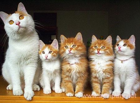 Кошка и котята с разных выводков