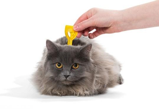 Блошиная обработка кошки