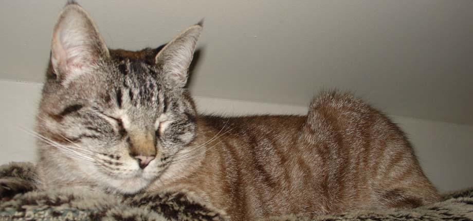 Как прервать беременность у кошки на ранних сроках