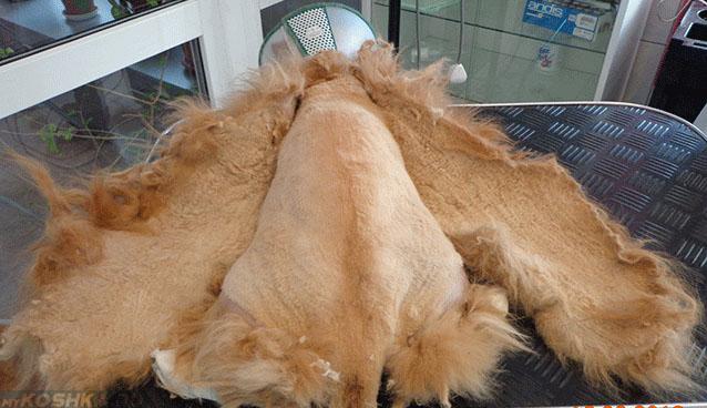Полная стрижка кошки от колтунов