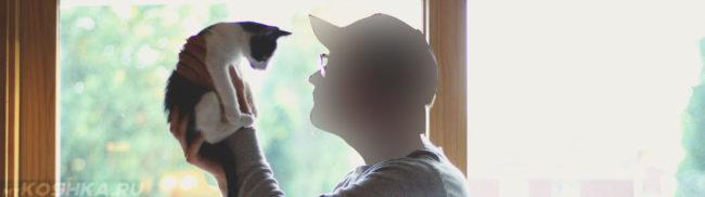 Осмотр котёнка на половые принадлежности