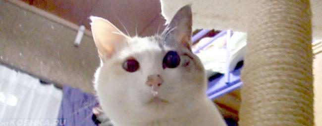 Морда кошки с насморком