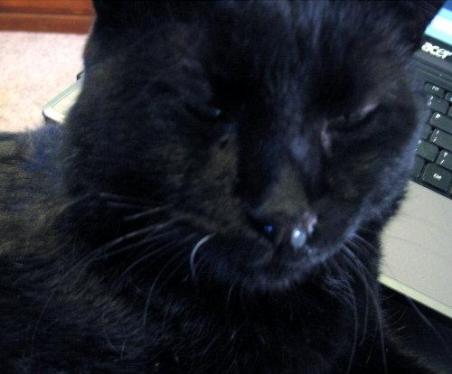Прозрачные сопли у чёрной кошки