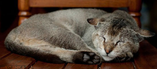 Старенькая пожилая кошка спит на полу
