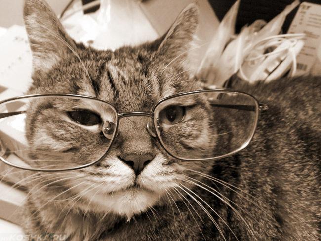 Старый кот в очках