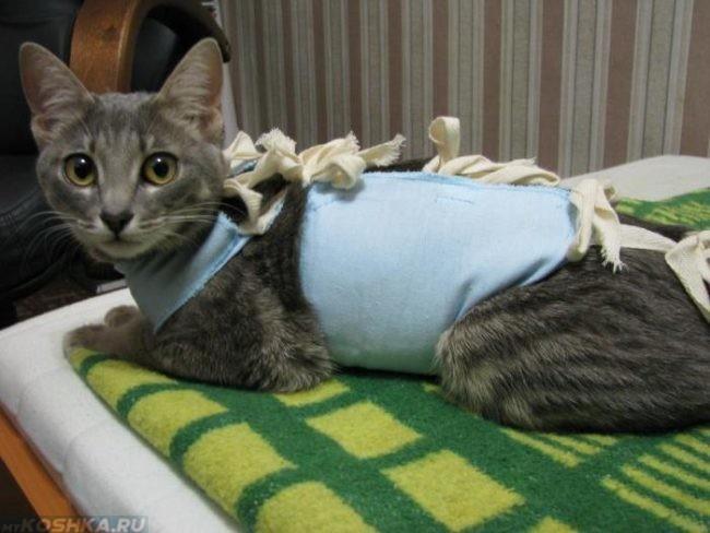 Стерилизованная кошка сразу после операции