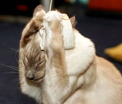 Сильный стресс у кошки