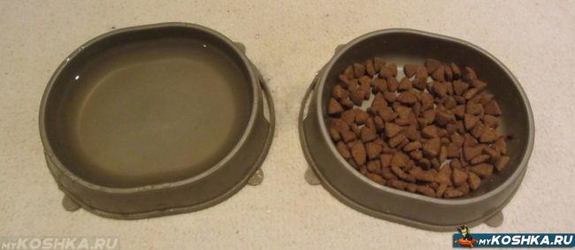 Сухая еда и вода в мисках для беременной кошки