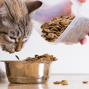 Кошка ест из миски сухую еду