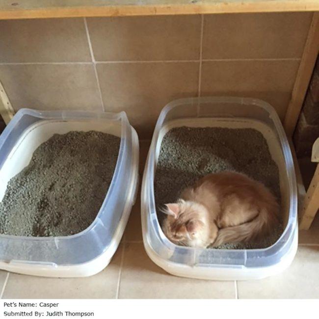 Тестирование кошкой нового лотка рядом со старым