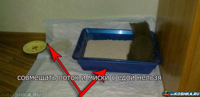 Кот гадил в лоток рядом с едой