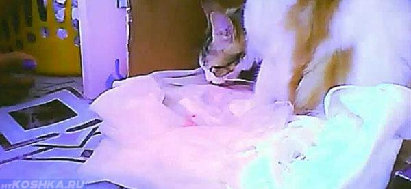 Кровяные выделения перед родами у беременной кошки