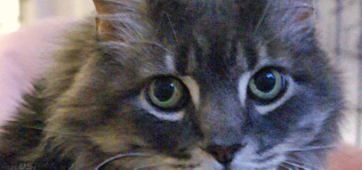 Взрослый кот смотрит на оператора