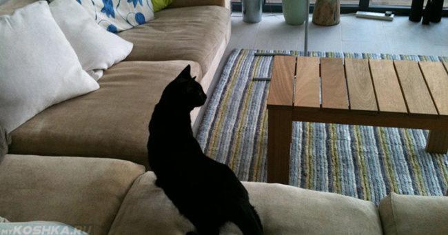 Кошка обнюхивает обгаженный диван