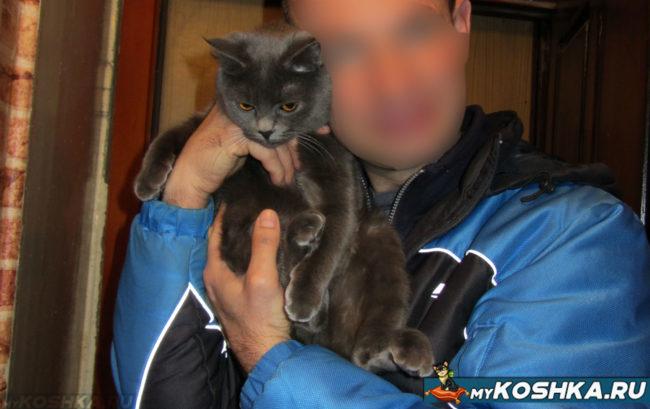 Кошка на руках владельца