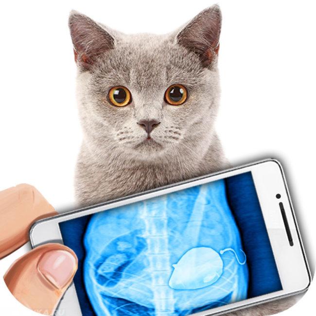 Рентген кота с помощью телефона
