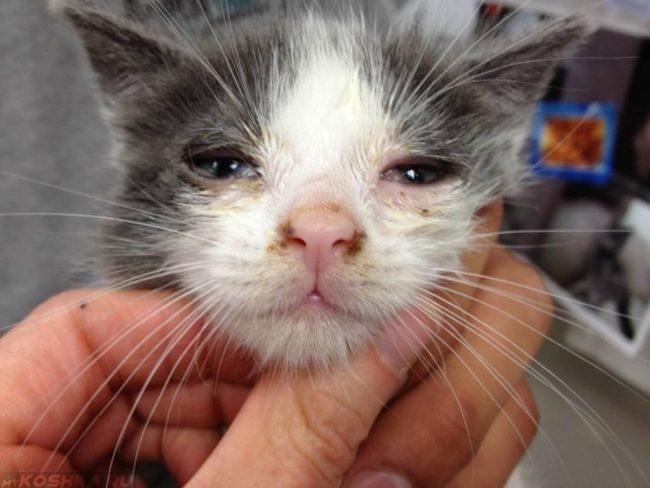 Двухцветный маленький кот с больными глазами