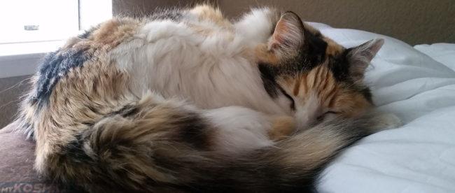 Кошка Зоя 16 лет