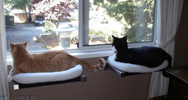 Две кошки лежат и смотрят в окно