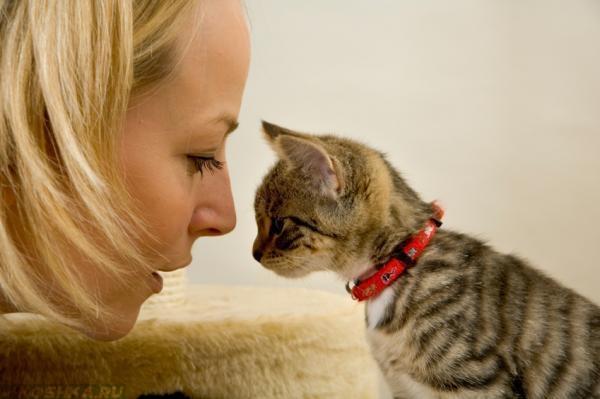 Девушка смотрит на кошку