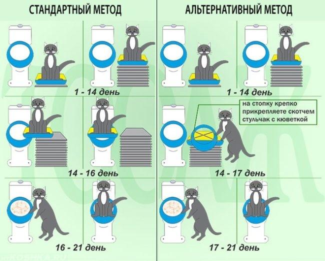 Схема приучения кота к унитазу по дням