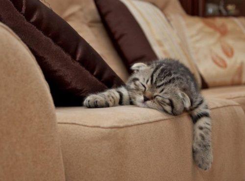 Трехцветный кот спит на диване