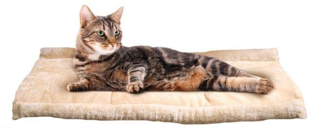 Кошка лежит на бежевой лежанке