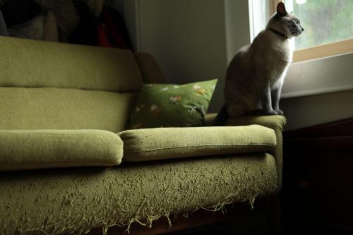 Зеленый диван с подушкой, на которой сидит кот