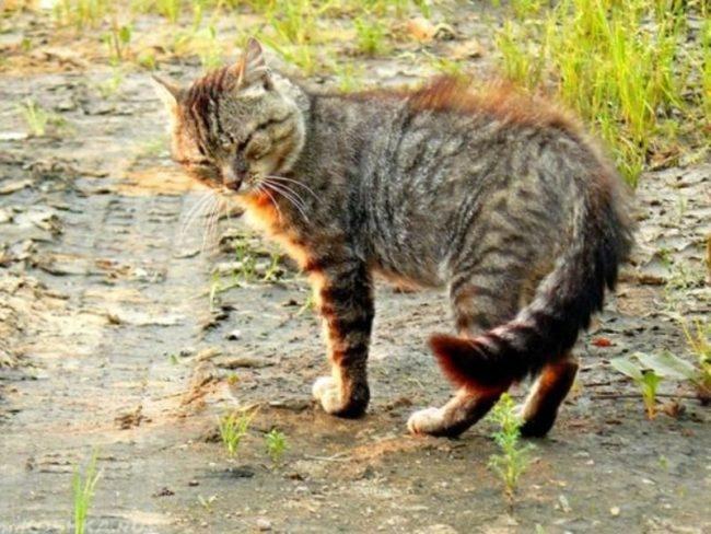 Грязный уличный кот стоит на улице