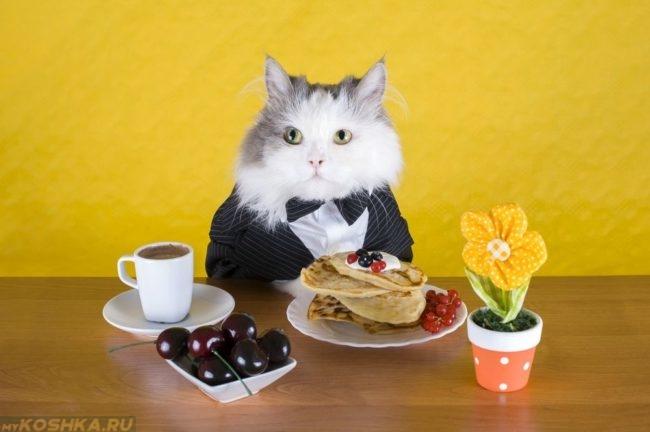 Кот в пиджаке сидит за столом с блинами и чашкой кофе