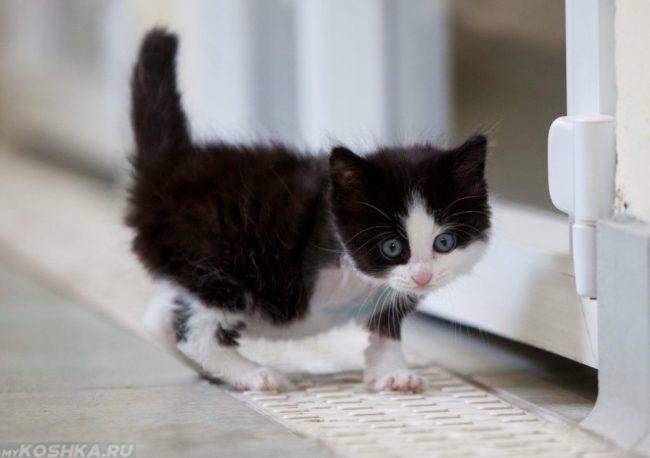 Растерянный двухцветный котёнок стоит возле двери