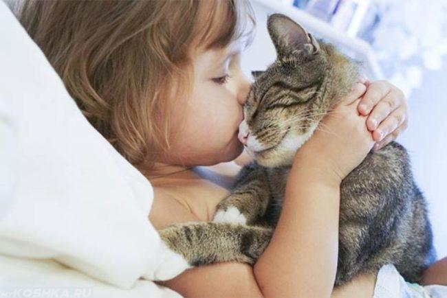 Девочка целует кота в глаз