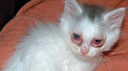 Котёнок с травмой глаз конъюнктивит