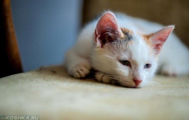 Кошка с грустным выражением лица