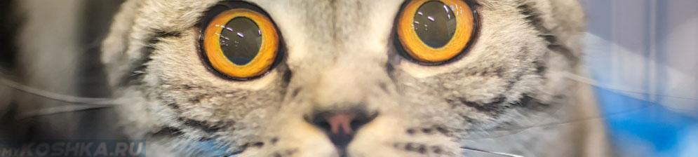 Кот сильно удивлён