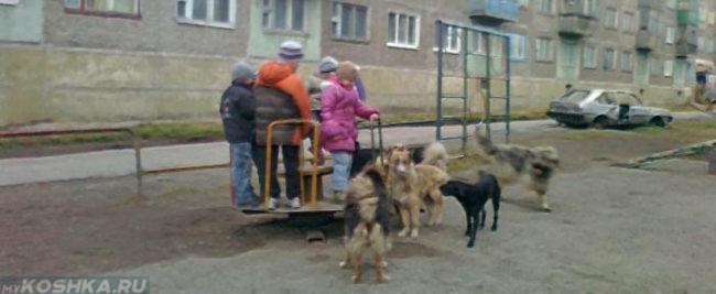 Дети и бездомные собаки