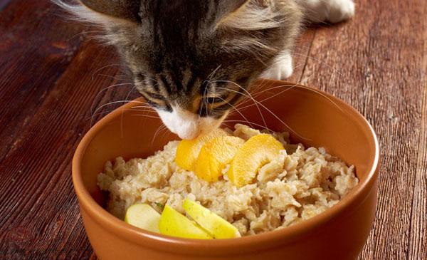 Кошка ест специальную диетическую еду