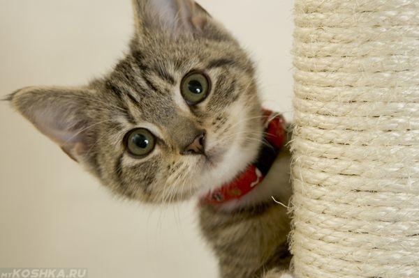 Дрессировка кошек в домашних условиях напрямую зависит от их возраста