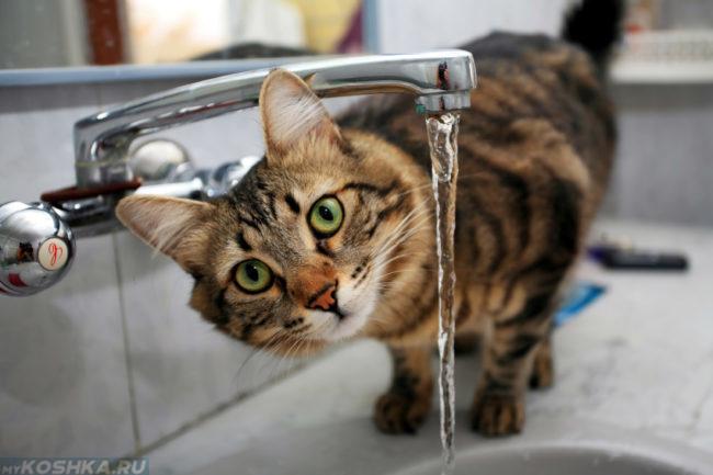 Разноцветная кошка пьет воду из под крана