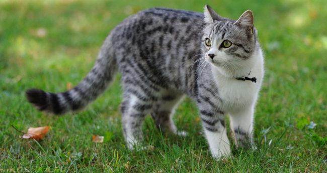Домашняя кошка гуляет на природе