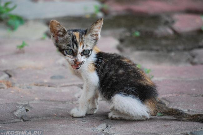 Худой уличный котёнок