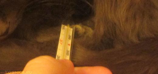 Измерение температуры кошке ртутным градусником