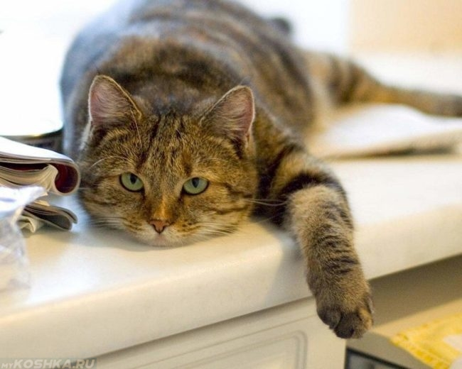 Вялый кот свесил лапу с подоконника