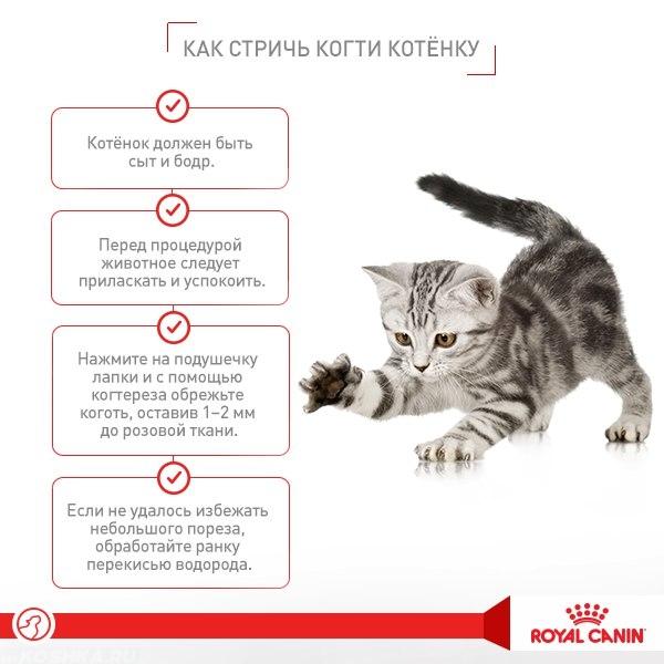 Чем подрезать когти коту