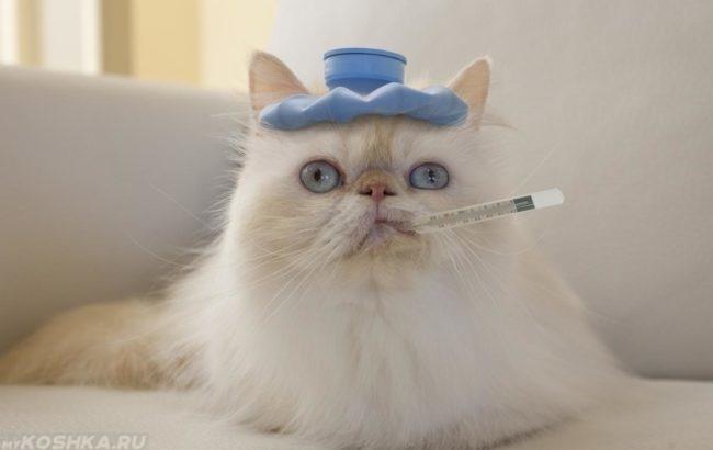 Белая кошка с градусником во рту